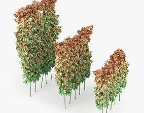 parthenocissus quinquefolia 3D