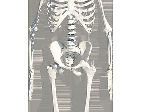 3D model Skeleton For Revit