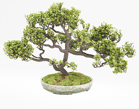 3D model blossoming Bonsai