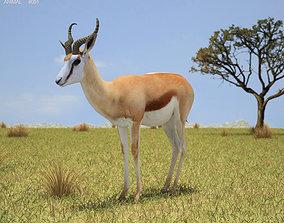 Springbok Antidorcas Marsupialis 3D model