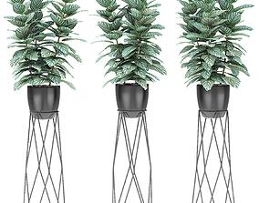 flowerpot 3D model Plant in Pot Flowerpot Exotic Plant