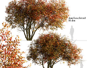 3D model Set of Amelanchier - Shadbush or Serviceberry 4