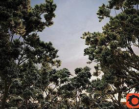 3D HeliosVegetation vol2 - Eucalyptus Corona