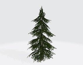 Cedar tree 3D asset