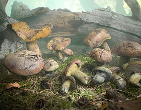 Realistic Forest Mushrooms - Suillus Brown 3D asset