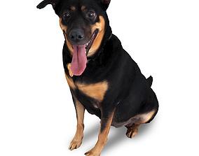 realtime 3D Scanned Dog