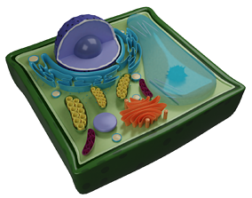 3D model low-poly PLANT CELL