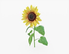 Sunflower 3D model VR / AR ready
