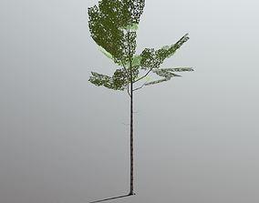 3D asset Superfuntimes Birch Tree