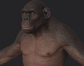 Ape naked 3D