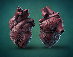 3D print model Humans Heart biology