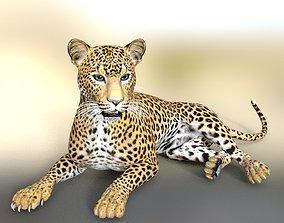 big cat wild 3D