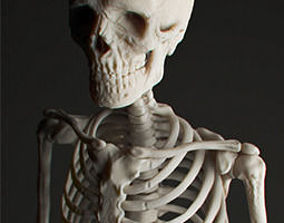 Human Skeleton 3D