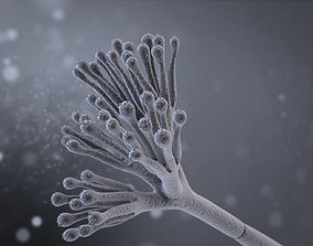 Penicillium Chrysogenum 3D