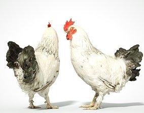 3D asset Brahma Rooster