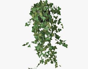 3D model ivy in pot