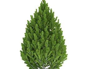 3D Green Pine Tree