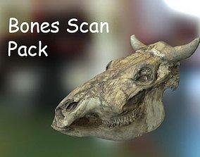 PBR Bones Scan Set 3D asset
