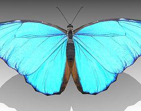 3D model animated Blue Morpho Butterfly
