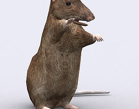 3DRT - Rat animated
