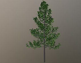 Maple Tree 3D asset