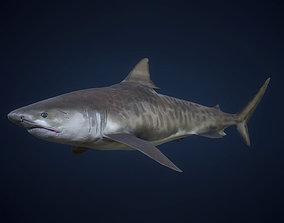 3D model Tiger Shark - GameReady