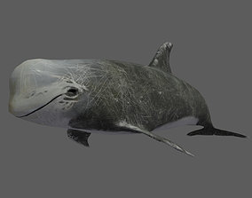animated Low Poly Risso Dolphin 3D Animated - Game Ready