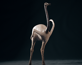 animal Realistic 3D model of Ostrich