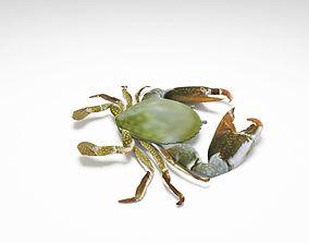 3D model rigged crab ocean