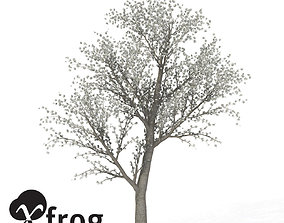 XfrogPlants Sweet Cherry Tree 3D