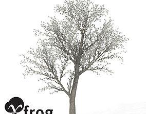 XfrogPlants Sweet Cherry Tree 3D