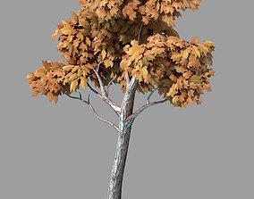 Plants - Arbor 36 3D model