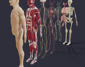 3D model Human Anatomy - Male - Explosive View