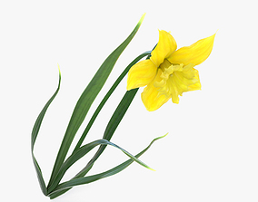 3D Daffodil