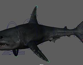 Shark shark 3D model animated