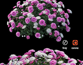 Chrysanthemum flower Plant set 07 3D model