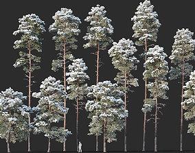 3D Pinus sylvestris Mega Collection Winter 12 models