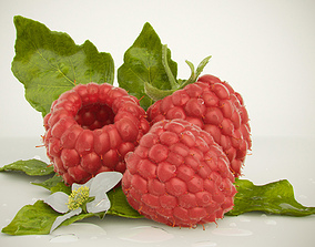 3D model Raspberry