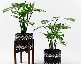 vase monstera plant 3D