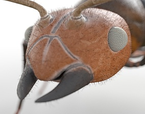 3D model Ant Rigged Hairs