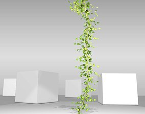 Ivy Vine - Version 10 3D asset