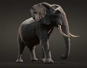 African elephant 3D model animated VR / AR ready