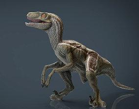 Velociraptor 3D asset