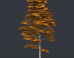 3D asset Low Poly Tree 15