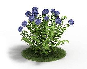 Purple Hydrangea Plant 3D