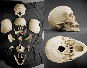 3D model VR / AR ready PBR Human Skull