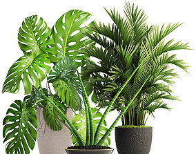 Collection of plants 3D
