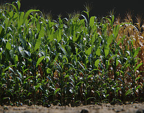 Corn Plants 15 Types in 5 Ages - PBR AssetKit game-ready