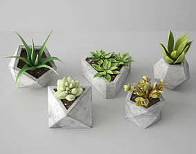 Concrete Potted Cactus Set 3D