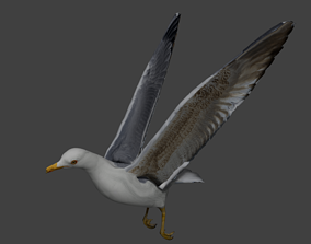 Seagull 3D asset animated